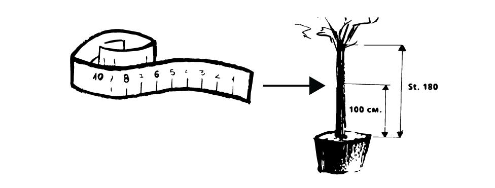 диаметър на стъбло